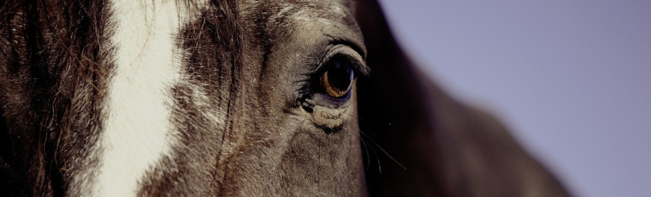 pferdegestüztes Coaching